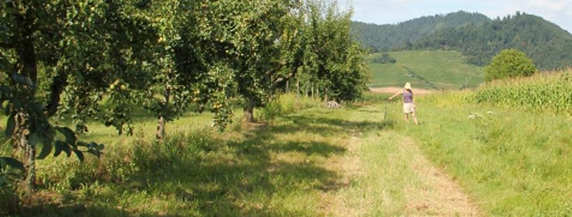 Ackerfläche zur Haselnussförderung
